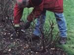 Pruning Advice 2