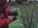 Pruning Advice 3